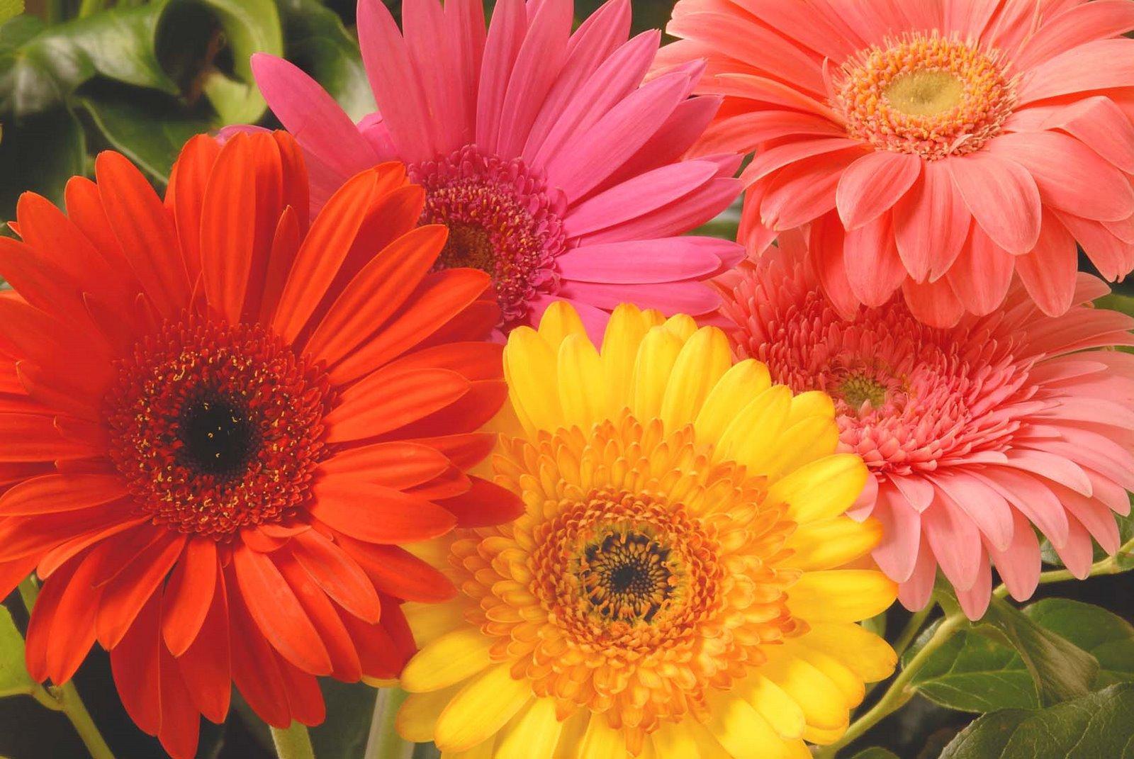 Tipos de flor
