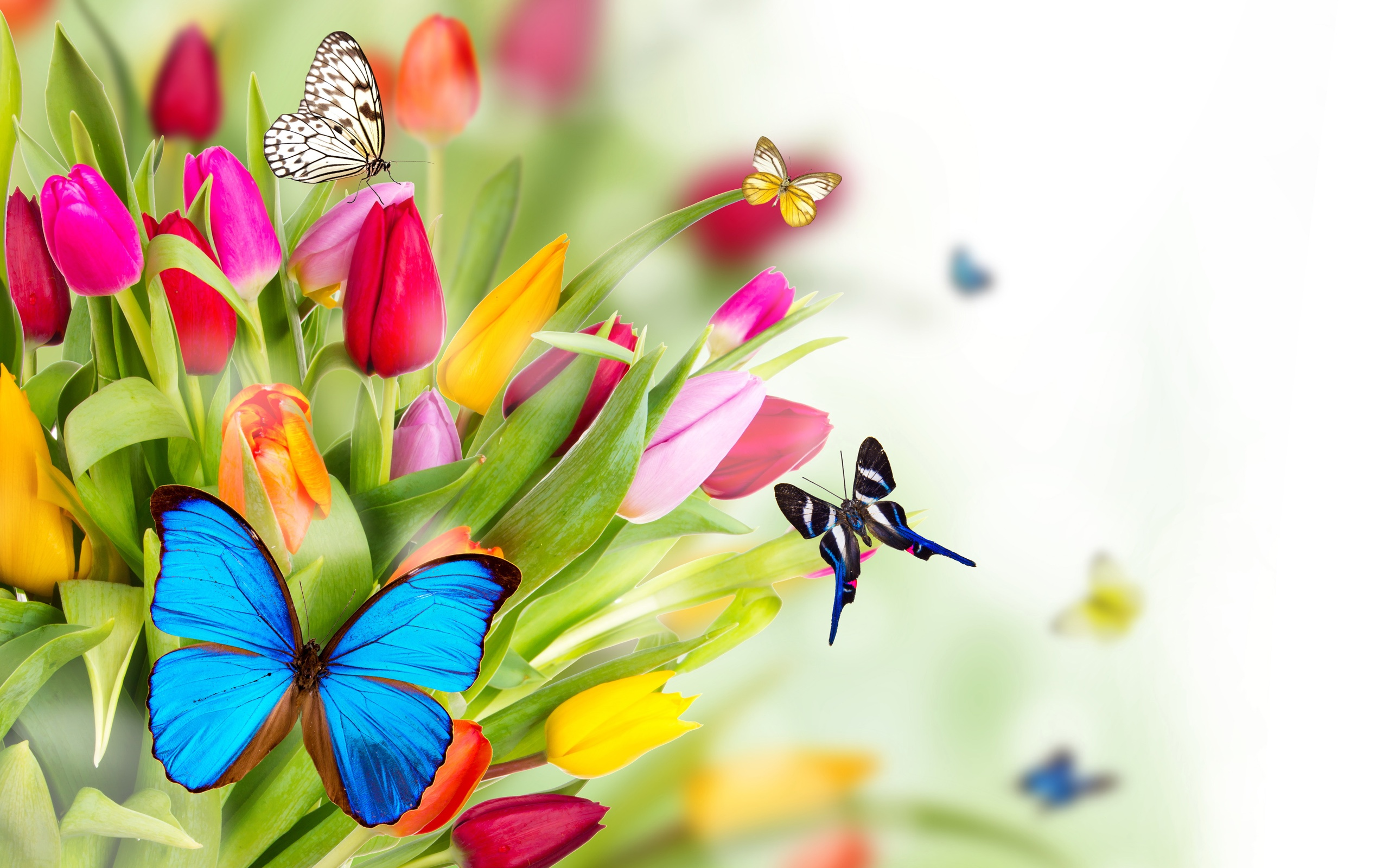 Tulip-flowers-and-butterfly_2560x1600