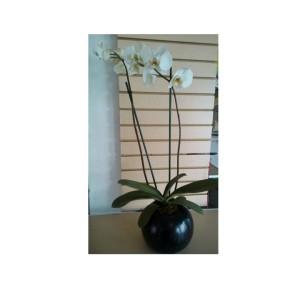 orquidea promocion
